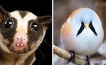 20 slika životinja koje izgledaju tako čudno da nećete vjerovati da su prave