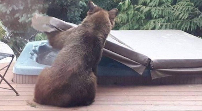 Medvjed je skinuo zaštitu s jacuzzi kade i okupao se, ovo je urnebesno