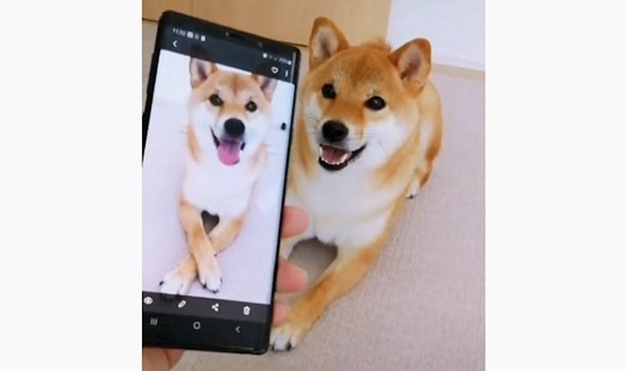 VIDEO Presladak pas ponavlja sve što mu vlasnik pokaže na mobitelu