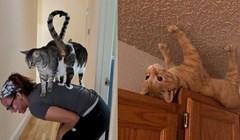 15 mačaka koje uvijek izvode nekakve smicalice