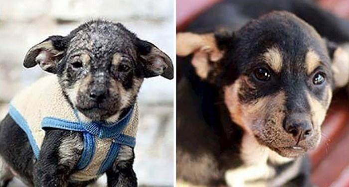 Fotke prije i nakon usvajanja napuštenih pasa kojima je ova organizacija dala drugu priliku za život