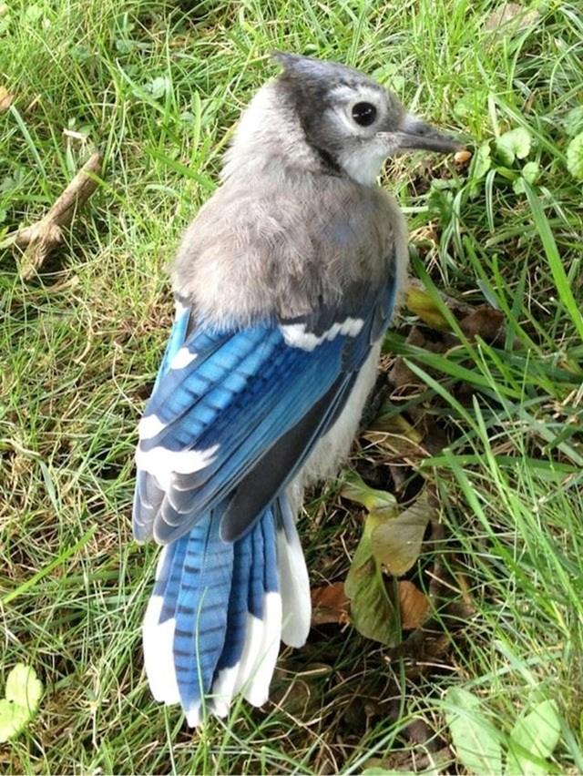 Ova ptičica još ima svog perja od kad je bila beba :)