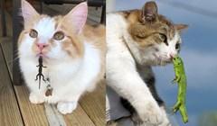 Mačke koje su se sprijateljile s gušterima