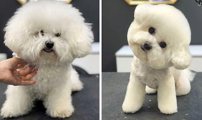 30 psića koji su otišli na šišanje i pretvorili se u neke druge ljubimce