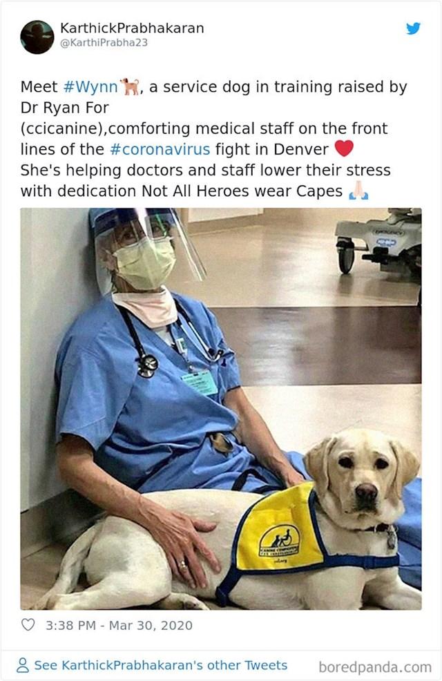 Pas Wynn, pomaže medicinskom osoblju u borbi sa stresom zbog koronavirusa
