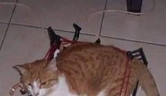 Mačka je umislila da je boksač, ali je zaboravila da je debela. Rezultat je urnebesan