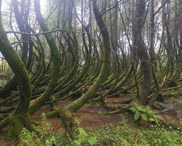 Neobična stabla