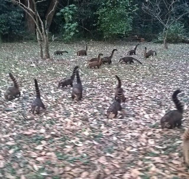 Jeste li i vi pomislili da su na slici dinosauri? :D