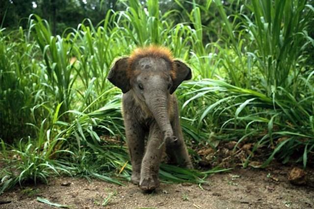 Beba slona
