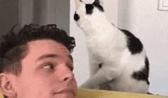 Ako to do sada niste shvatili, ovo će vam dokazati da su mačke totalne čudakinje