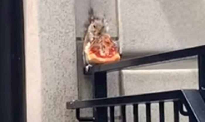 Mali lopov - netko je snimio vjevericu koja je sjedila ispred nečijih kućnih vrata i jela pizzu