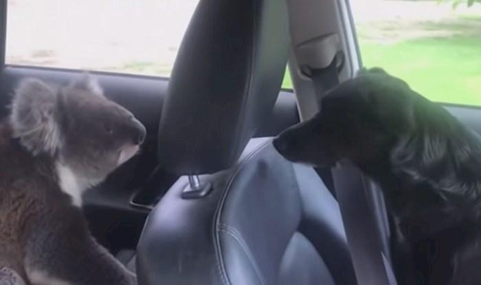 VIDEO Čovjek je ostavio otvoren prozor na autu, pogledajte koga je pronašao kada se vratio