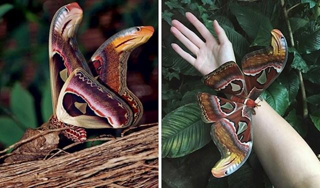 Krila atlasovog moljca izgledaju poput zmija