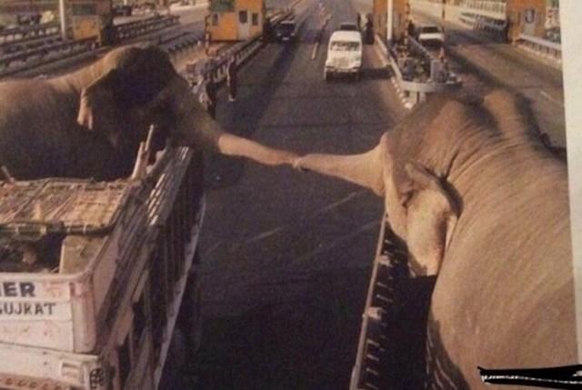 Susret slonova na cesti negdje u Indiji