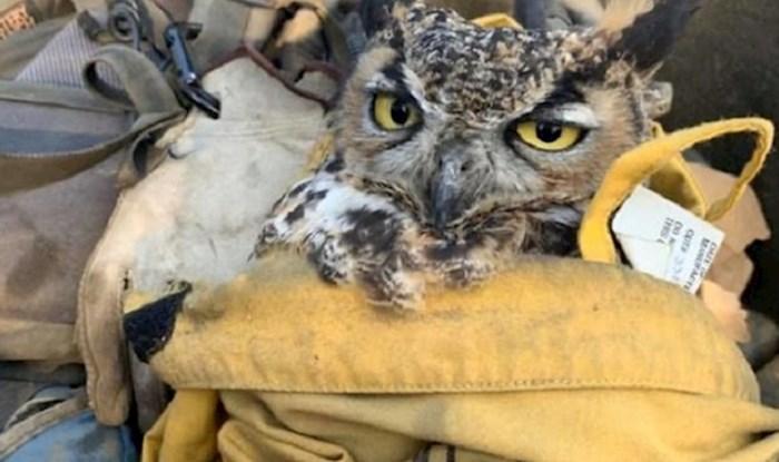 Spasili su ovu sovu iz požara, a ona izgleda kao da je zbog toga ljuta