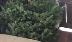 Muž i žena imaju tradiciju kupiti najružnije božićno drvce koje nađu, pogledajte ovo, očajno je