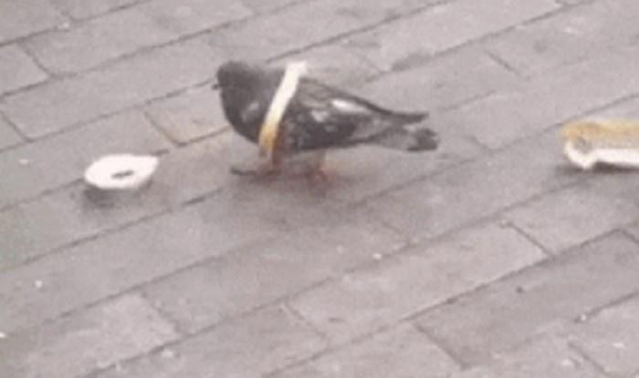 Netko je snimio goluba koji je pokušao jesti kruh koji je bio na podu, to je izgledalo smiješno