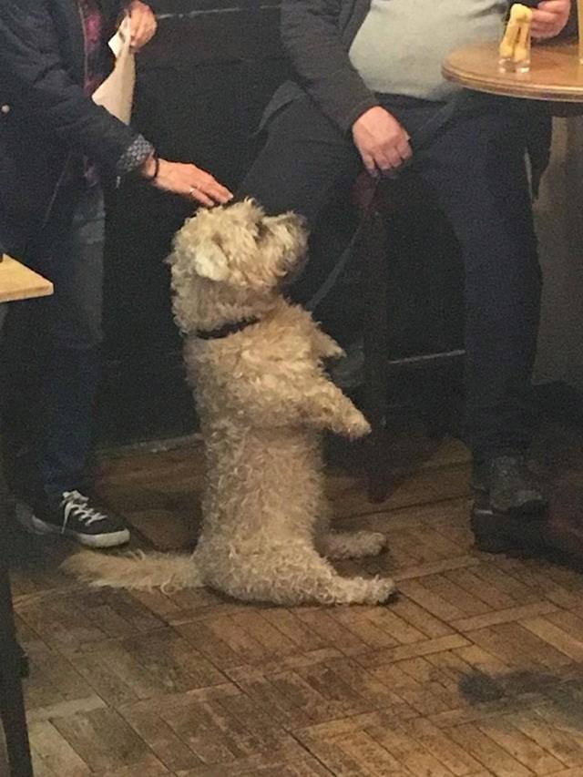 Pas je došao u pub i mislio je da nitko neće primijetiti da je pas...
