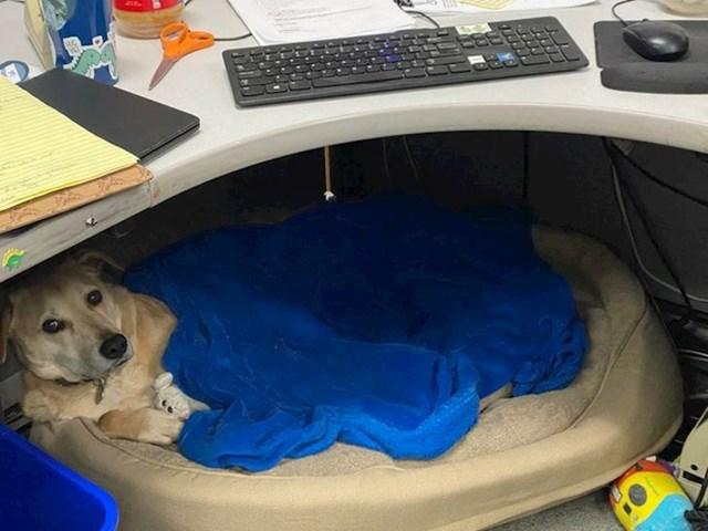 """""""Moj pas svaki dan dolazi sa mnom na posao. On je profesionalni spavač"""""""