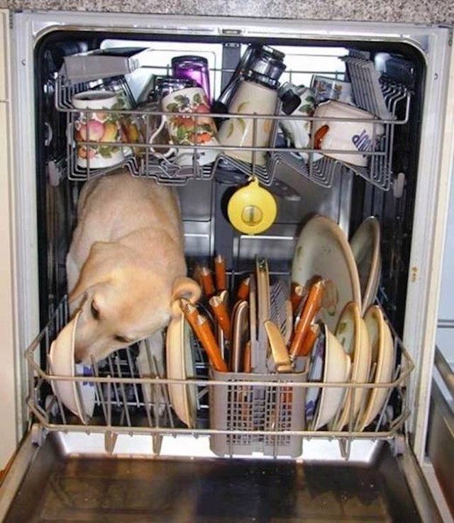 Vlasnicima ovog psa nije potrebna perilica posuđa