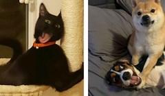 16 smiješnih životinja koje se ponašaju totalno ludo i svojim ludorijama nasmijavaju vlasnike
