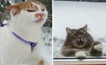 Fotke koje dokazuju da su mačke i snijeg dobitna kombinacija