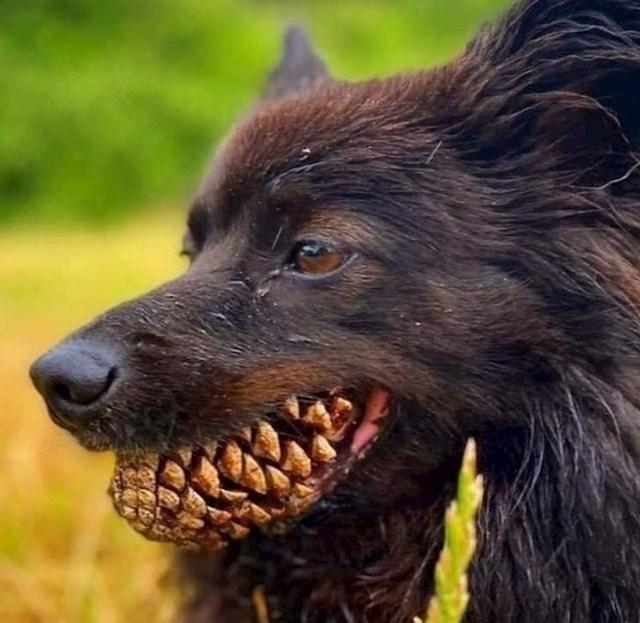 Zanimljivi zubi...