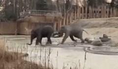 Jedan slon išao se napiti vode. Ono što se dogodilo nikad neće zaboraviti. Niti oprostiti