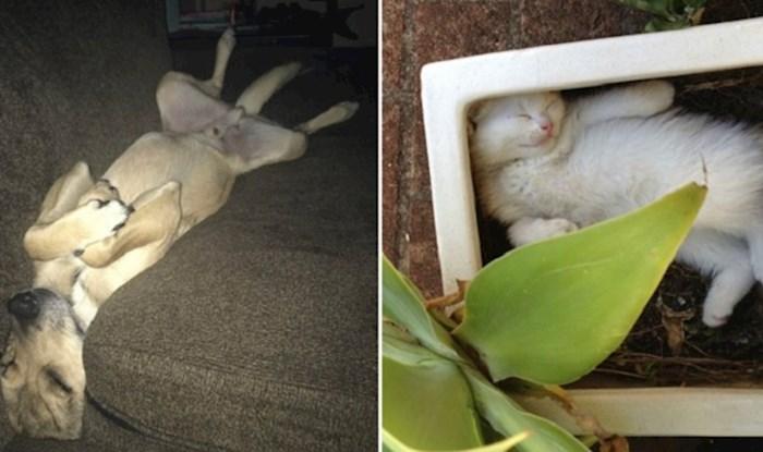 Vlasnici su fotkali svoje ljubimce koji mogu zaspati uvijek i svugdje