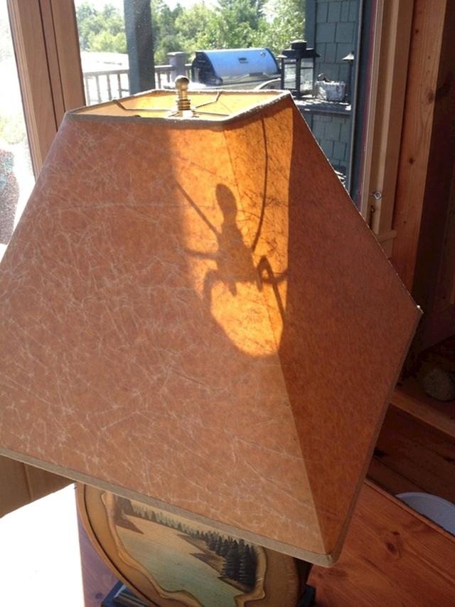 """Sunce je kreiralo jezivog pauka na mojoj lampi"""