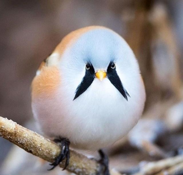 Ove ptičice imaju istog partnera cijeli život