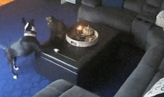 Kamera je zabilježila igru mačke i psa koja je umalo završila tragično