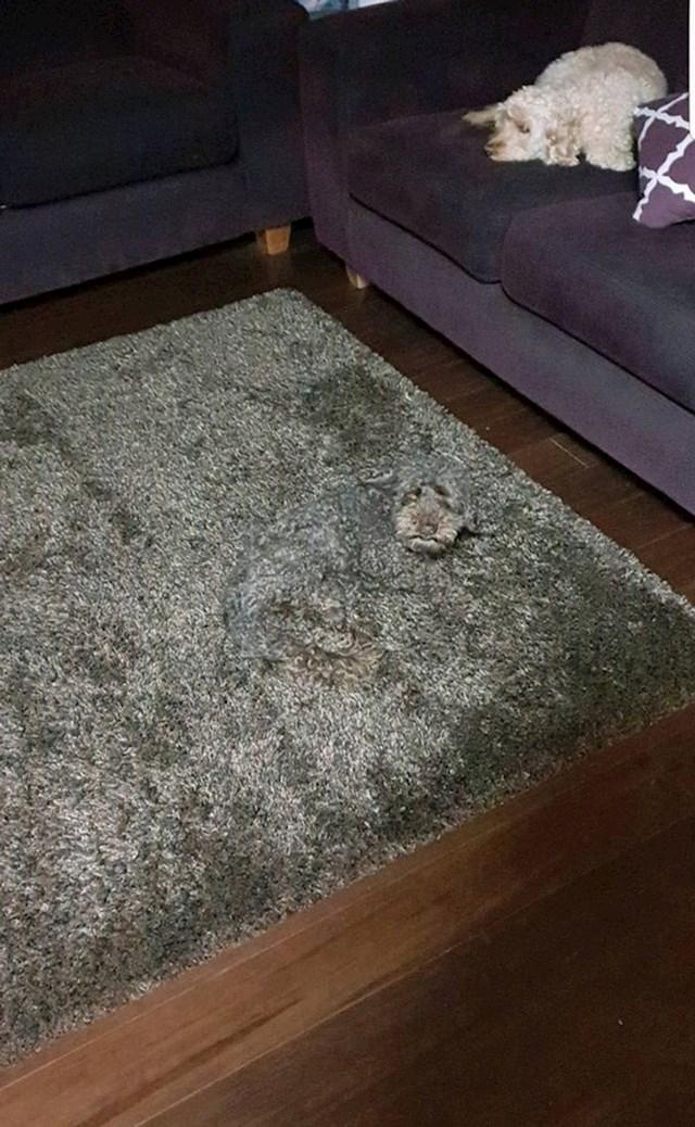 Možete li pronaći drugog psa?