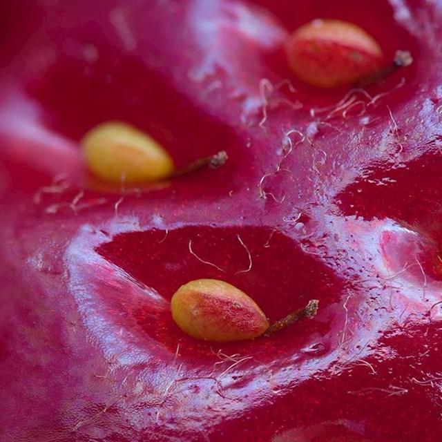 Površina jagode