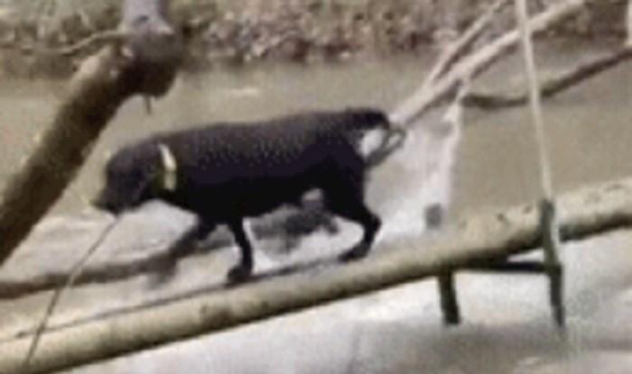Vlasnik ovog psa nije znao treba li se smijati ili biti šokiran postupkom svog ljubimca