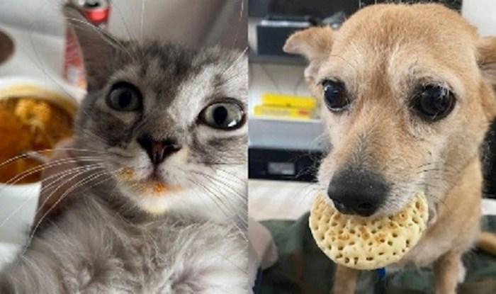 Životinje koje su uhvaćene u krađi hrane i uopće im nije žao