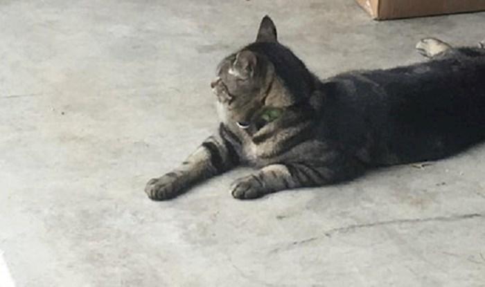 Naša mačka je beskorisna - evo što je toliko nasmijalo njene vlasnike