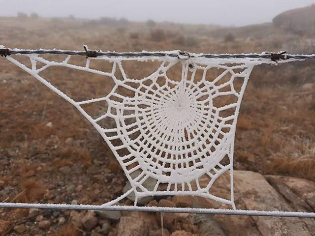 Smrznuta paukova mreža izgleda kao djelo nečije bake...