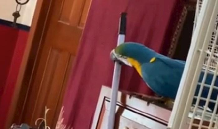 Lik je snimio svoju papigu koja je jezivo pametna, pogledajte kako otvara ladicu u kojoj je kikiriki