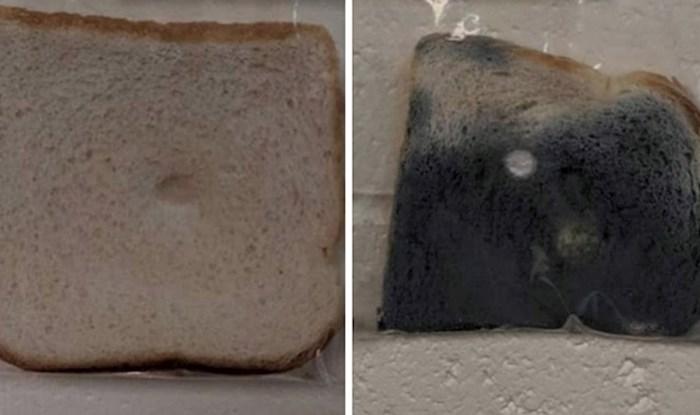 Ovaj školski projekt s kruhom postao je viralan jer dokazuje koliko je bitno prati ruke
