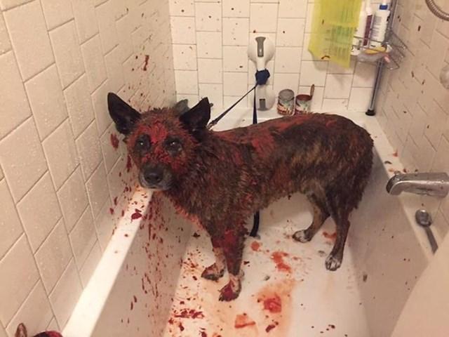 """""""Prijateljevog psa pošpricao je tvor svojim smradom i on je to pokušao neutralizirati sokom od rajčice..."""""""