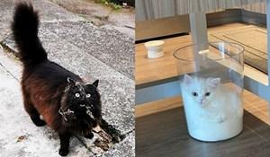 Ljudi koji su zaboravili što je dosada kada su udomili mačku