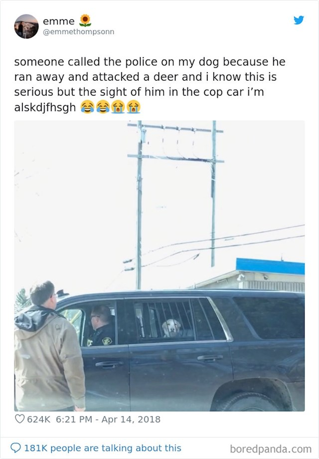 """""""Mog psa je netko prijavio policiji jer je napao jelena..."""""""