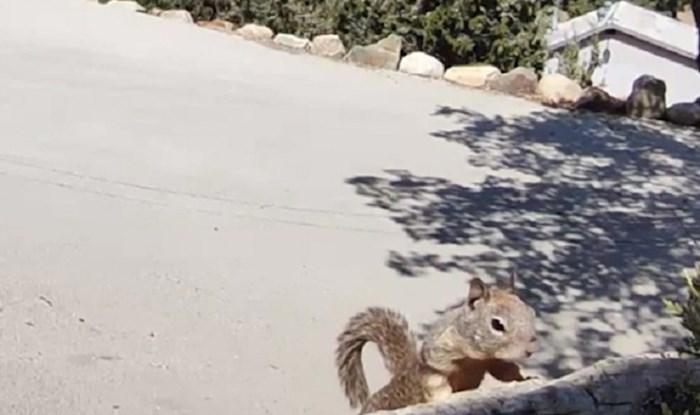 Ugledali su vjevericu na snimci kamere, iduća scena im je sledila krv u žilama
