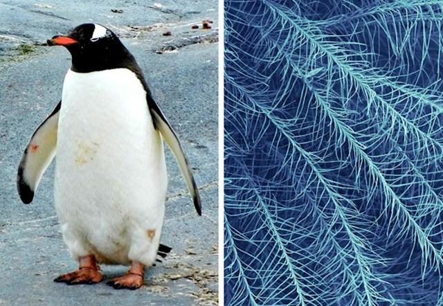 Pingvinovo perje