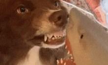 Pas je mislio da ga je napala igračka morskog psa, ovo je urnebesno