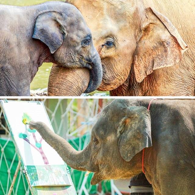 Slonovi imaju preko 300 milijardi neurona u svom mozgu