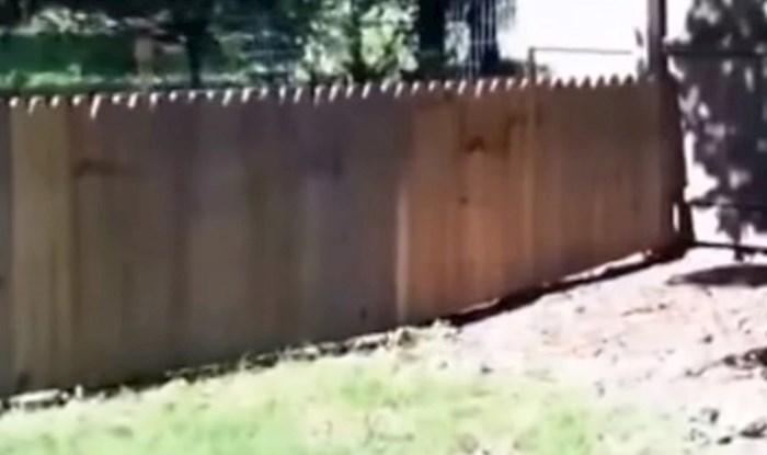 Napravio je ogradu kako njegov pas ne bi bježao, ali nije očekivao da će mu se ovo dogoditi