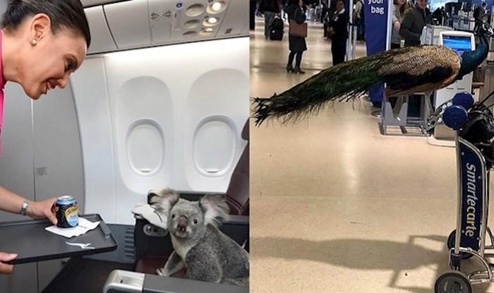 16 puta kada su ljudi uslikali neobične putnike u avionima i zračnim lukama
