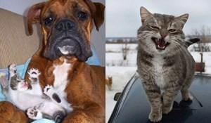 Slatke i smiješne životinje koje će vam sigurno uljepšati dan